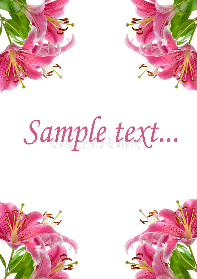 Quadro de lírios cor-de-rosa fotografia de stock