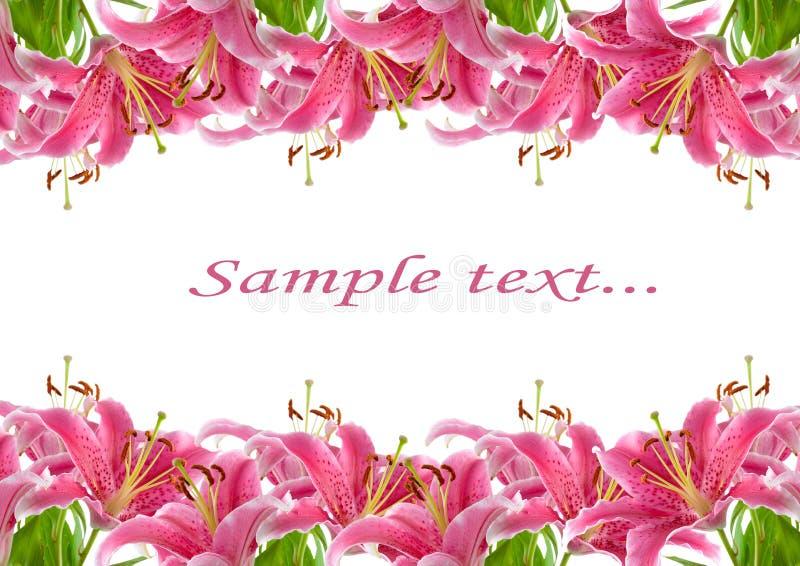 Quadro de lírios cor-de-rosa imagem de stock