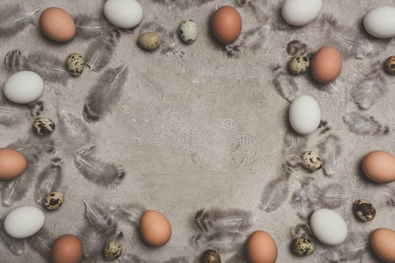 Quadro de ovos da galinha e de codorniz fotografia de stock