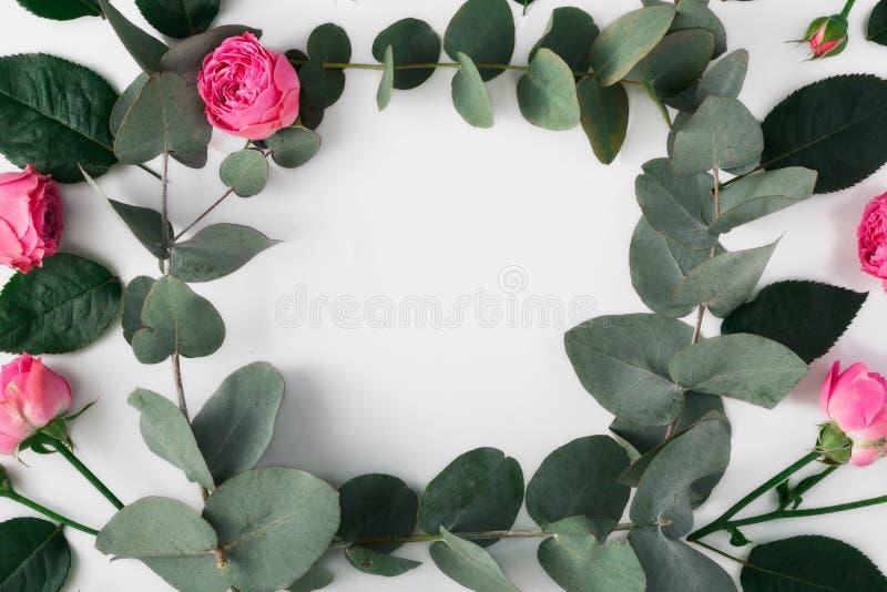 Quadro de ramos do eucalipto e de rosas cor-de-rosa ilustração royalty free
