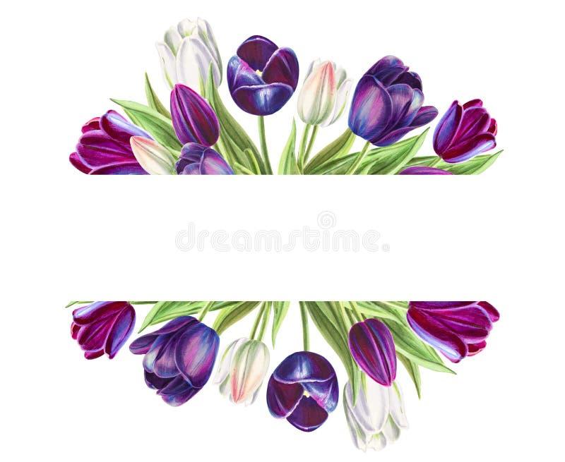 Quadro de texto bonito das tulipas brancas e pretas Desenho do marcador Pintura da aguarela ilustração stock