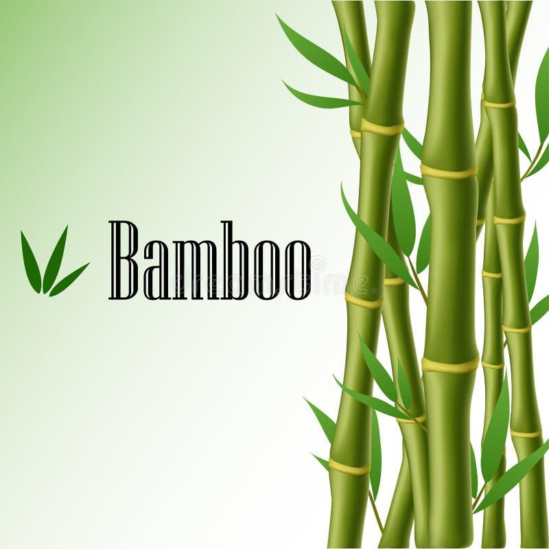 Quadro de texto de bambu ilustração do vetor