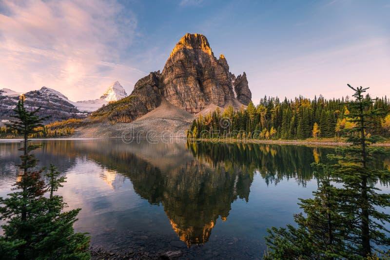Quadro del lago Sunburst e delle riflessioni di Assiniboine tra un pino all'alba fotografie stock