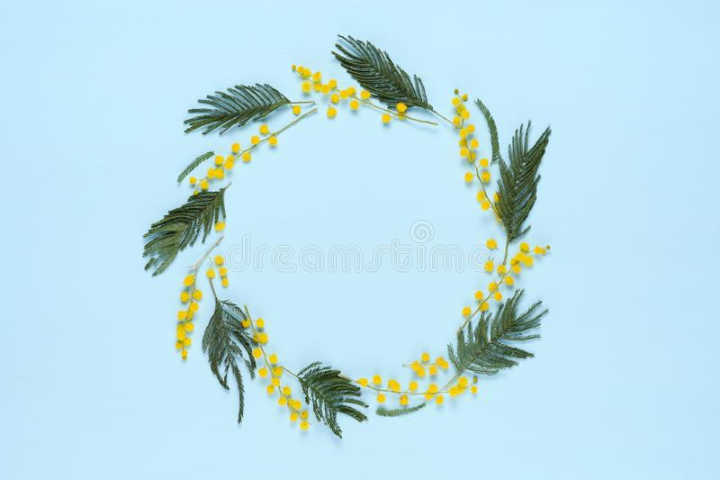 Quadro do círculo com flores da mimosa fotografia de stock