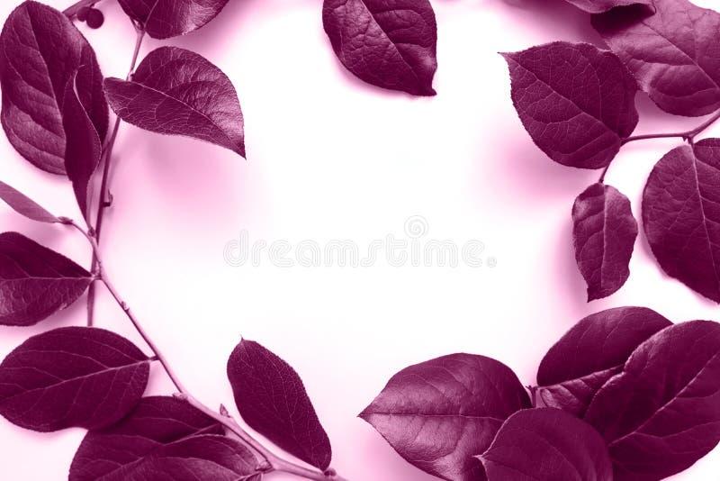 Quadro do círculo dos ramos com folhas verdes imagens de stock