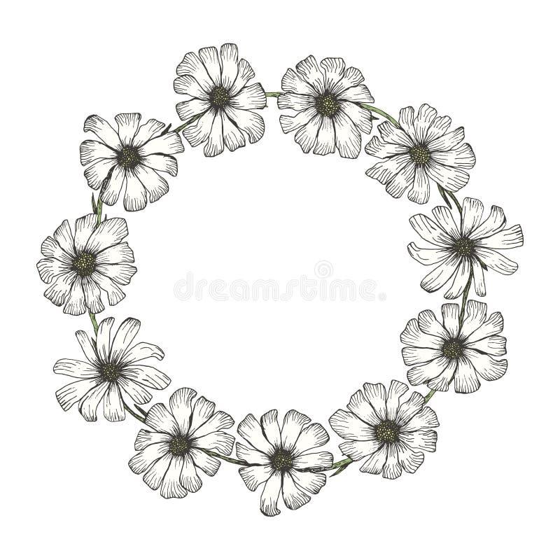 Quadro do círculo do vintage com as flores brancas da camomila ilustração do vetor