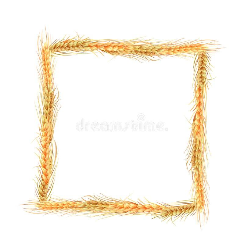 Quadro do centeio ilustração do vetor