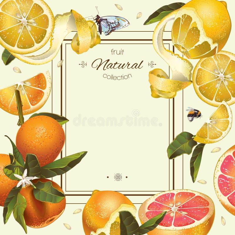 Quadro do citrino do vintage ilustração stock