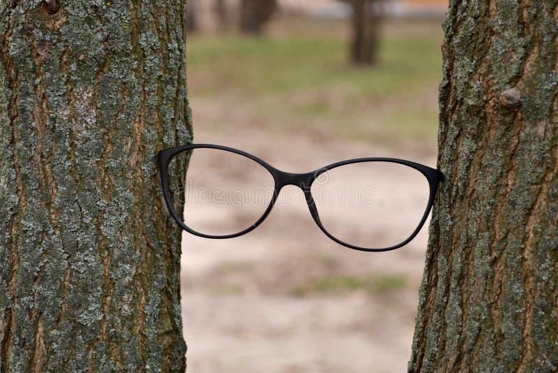 Quadro do monóculo entre árvores eyesight imagem de stock