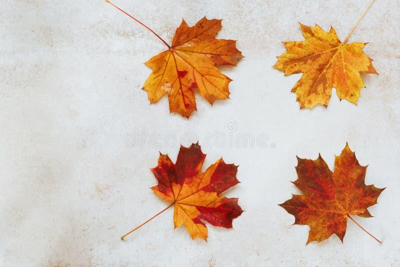 Quadro do outono com folhas coloridas imagem de stock royalty free