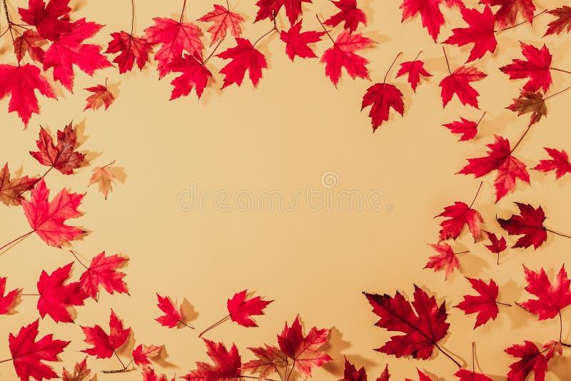 Quadro do outono da vista superior das folhas de bordo vermelhas caídas em luz textured - papel alaranjado Molde colorido do outo fotos de stock royalty free