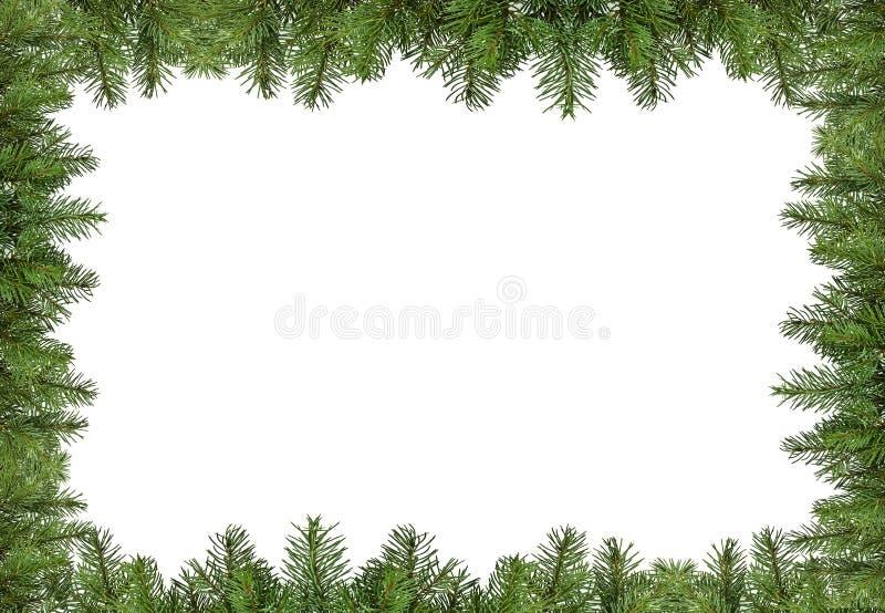Quadro do pinho do Natal imagem de stock royalty free