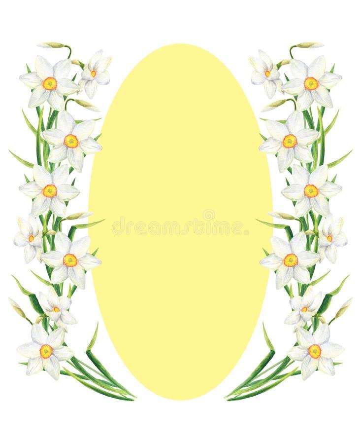 Quadro do retângulo da flor do narciso da aquarela com espaço amarelo da elipse para o texto Grinalda tirada mão do narciso amare ilustração stock