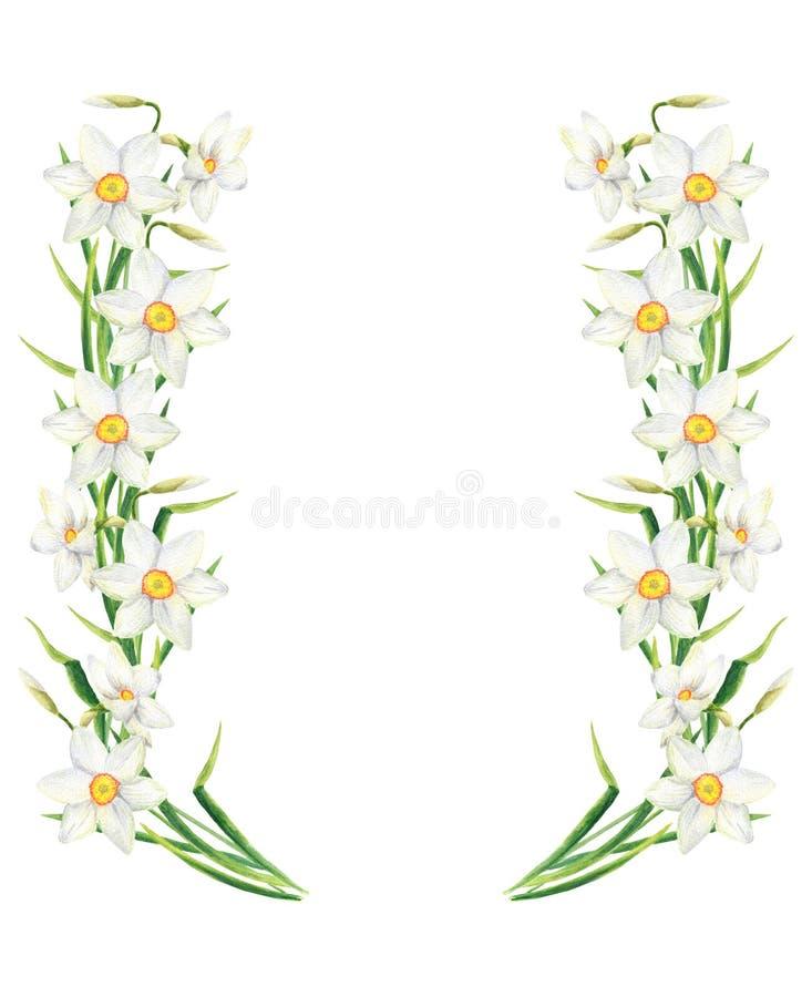 Quadro do retângulo da flor do narciso da aquarela Ilustração tirada mão da grinalda do narciso amarelo isolada no fundo branco ilustração stock