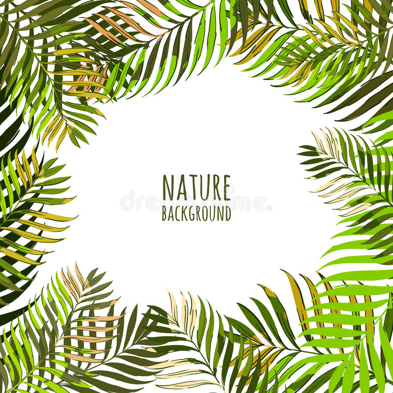 Quadro do vetor com folhas de palmeira do coco Fundo floral do verão com as folhas verdes tropicais ilustração do vetor