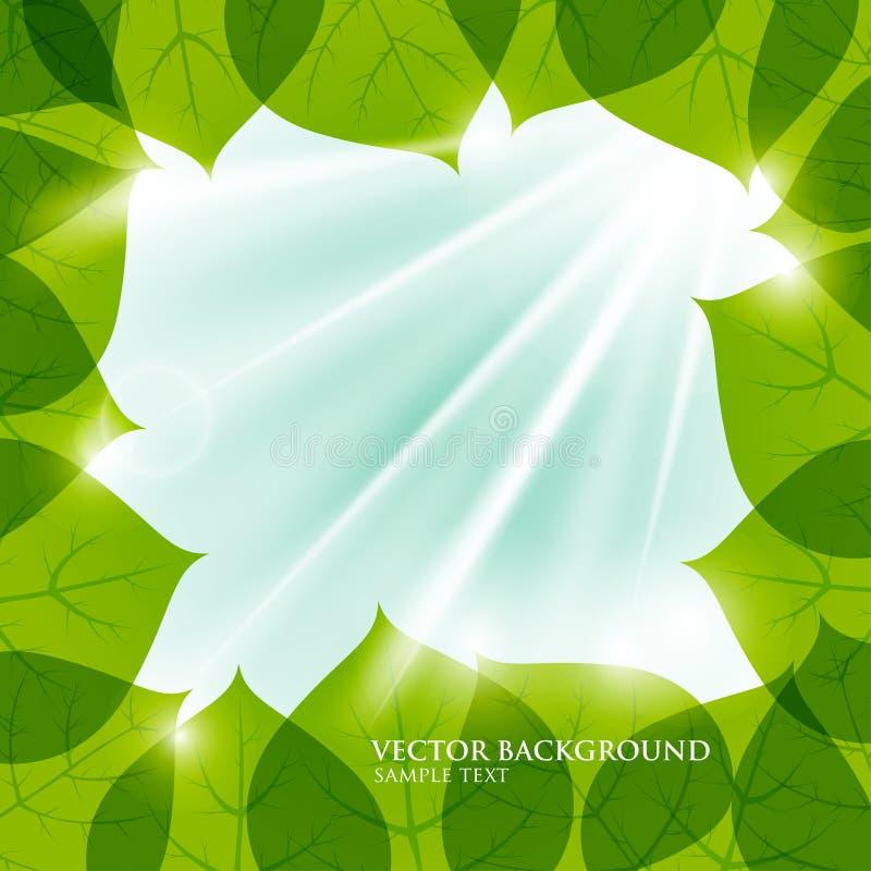 Quadro do vetor das folhas Fundo natural O filte dos raios do sol ilustração royalty free