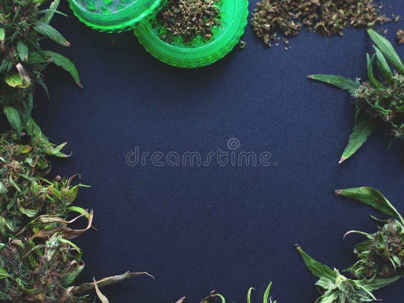Quadro dos botões da marijuana em um escuro - espaço azul da cópia do fundo as flores do cannabis modelam a configuração lisa imagem de stock