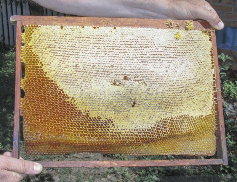 Quadro dos favos de mel nas mãos de um homem foto de stock royalty free