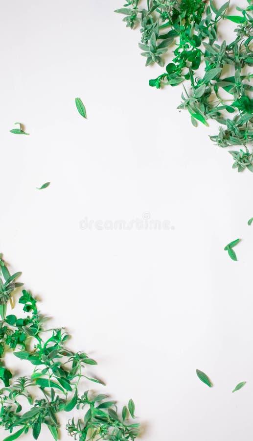 Quadro dos ramos verdes, folhas em um fundo branco Configuração lisa, vista superior ilustração royalty free