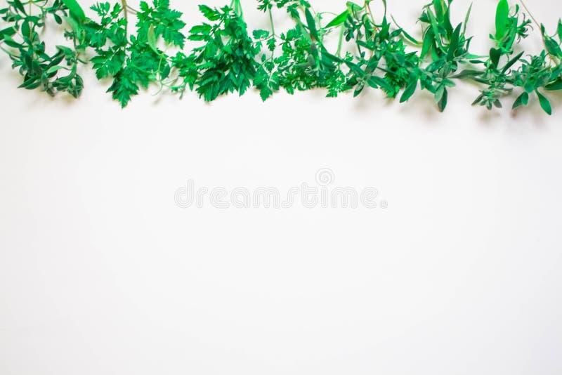 Quadro dos ramos verdes, folhas em um fundo branco Configura??o lisa, vista superior ilustração stock