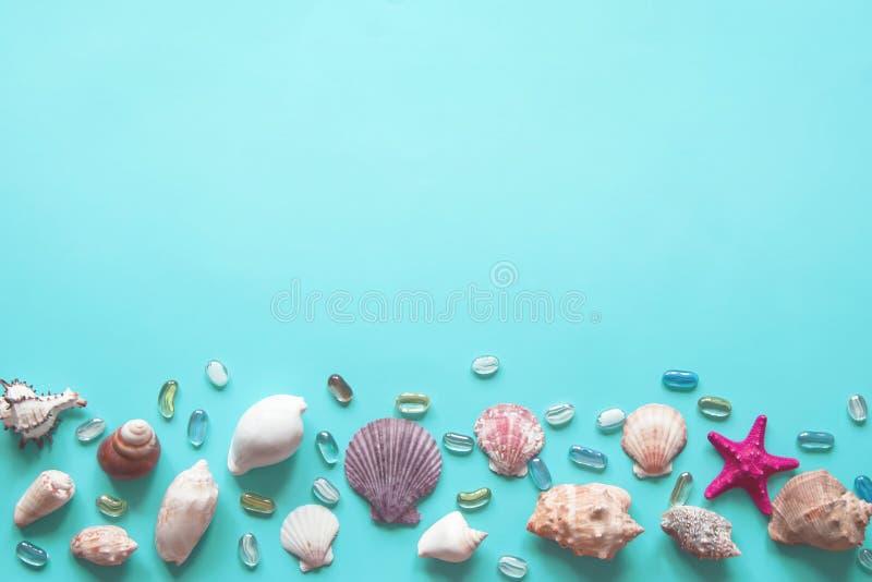 Quadro dos shell de v?rios tipos em um fundo azul imagens de stock royalty free