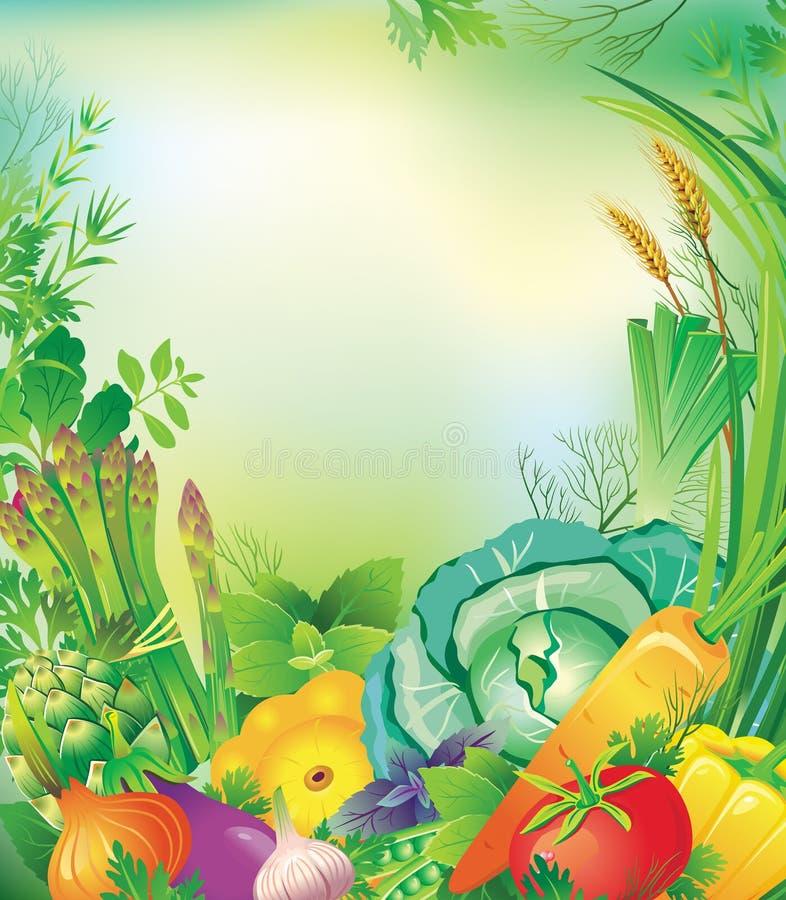 Quadro dos vegetais e das ervas ilustração do vetor