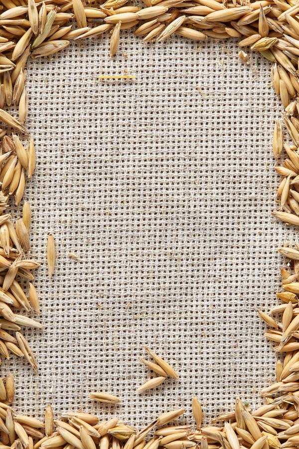 Quadro feito de grões de aveia unpeeled no fundo de serapilheira, vista superior, close-up, macro, foco seletivo foto de stock