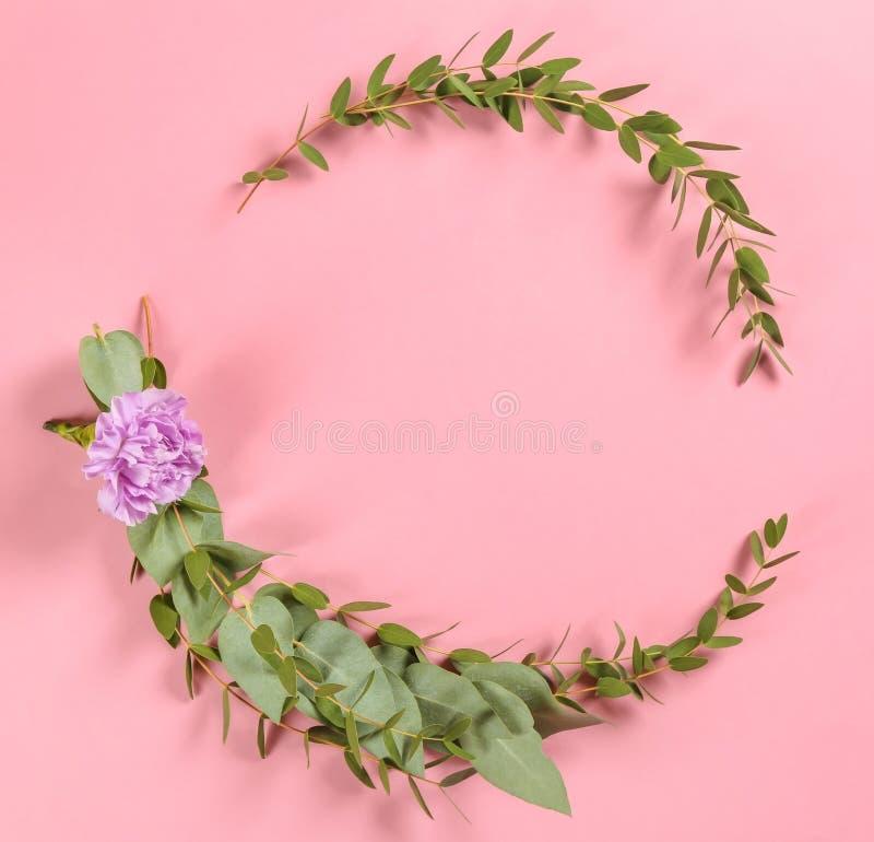 Quadro feito de ramos e da flor verdes do eucalipto no fundo da cor imagem de stock royalty free