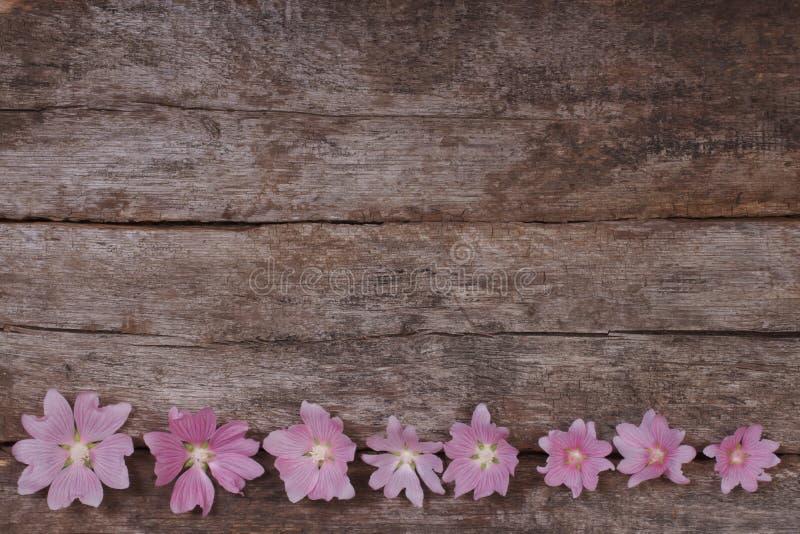 Quadro festivo da flor de flores cor-de-rosa da malva imagens de stock royalty free