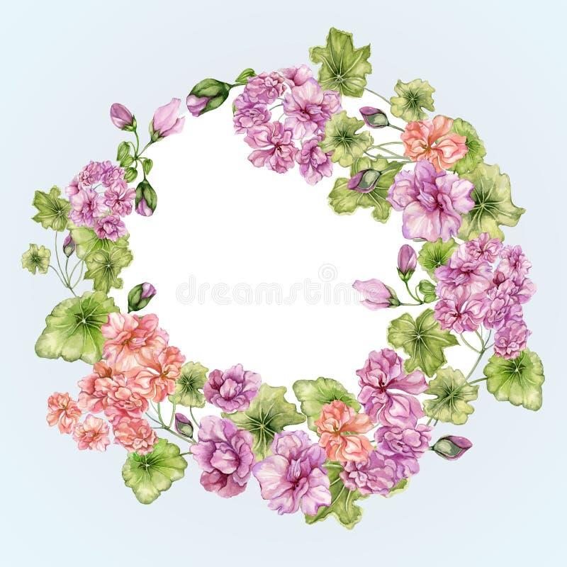 Quadro floral bonito com flores e folhas do pelargonium Beira botânica do vintage Círculo, forma do anel Pintura da aguarela Mão ilustração royalty free