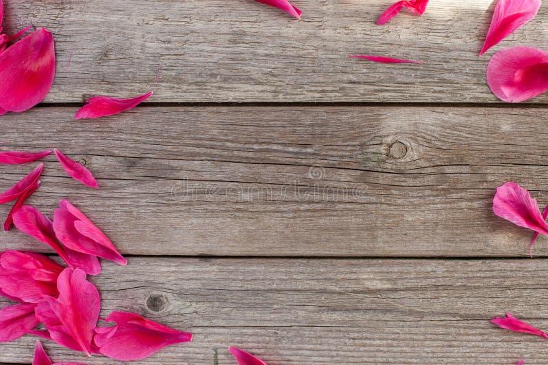Quadro floral com as peônias cor-de-rosa no fundo de madeira foto de stock