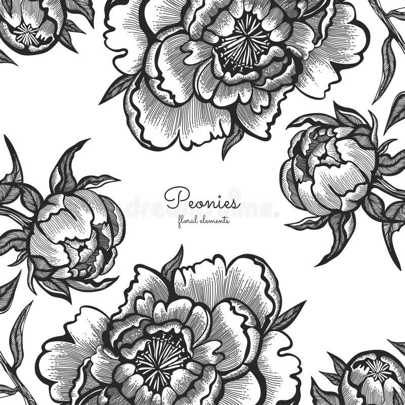 Quadro floral com as peônias tiradas mão do vintage Elementos do vetor para convites, cartões do casamento ilustração stock