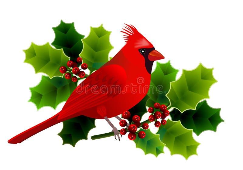 Quadro floral com o pássaro cardinal no ramo do azevinho com folhas verdes e as bagas vermelhas ilustração do vetor