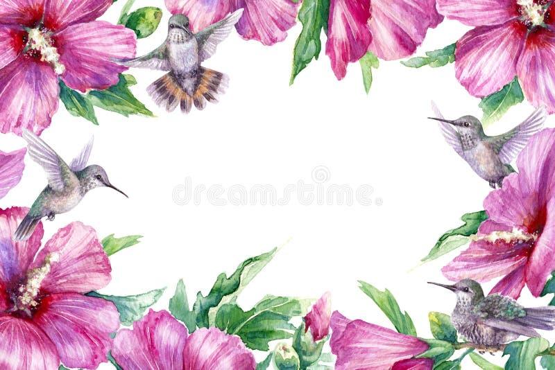 Quadro floral com pássaros do zumbido e a flor cor-de-rosa ilustração royalty free