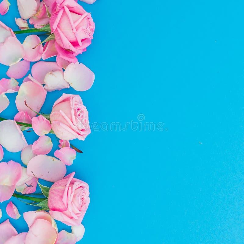 Quadro floral dos botões e das pétalas das rosas no fundo azul Configuração lisa, vista superior Textura cor-de-rosa das flores d fotografia de stock