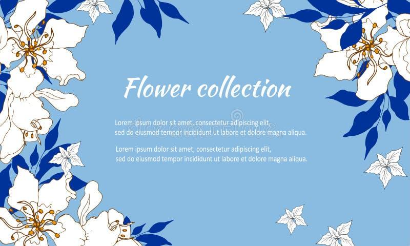 Quadro floral elegante com as flores brancas pintadas delicadas em um fundo azul para felicita??es e convites Vetor ilustração royalty free
