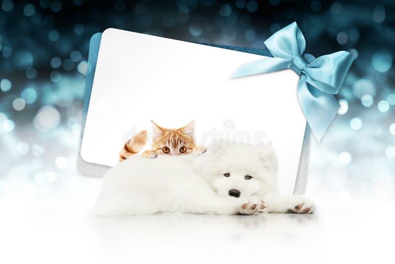 Quadro indicador ou vale-oferta do Feliz Natal para o clini da loja de animais de estimação ou do veterinário fotografia de stock