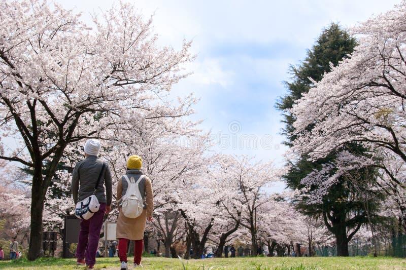 Quadro japonês das flores de cerejeira imagem de stock royalty free