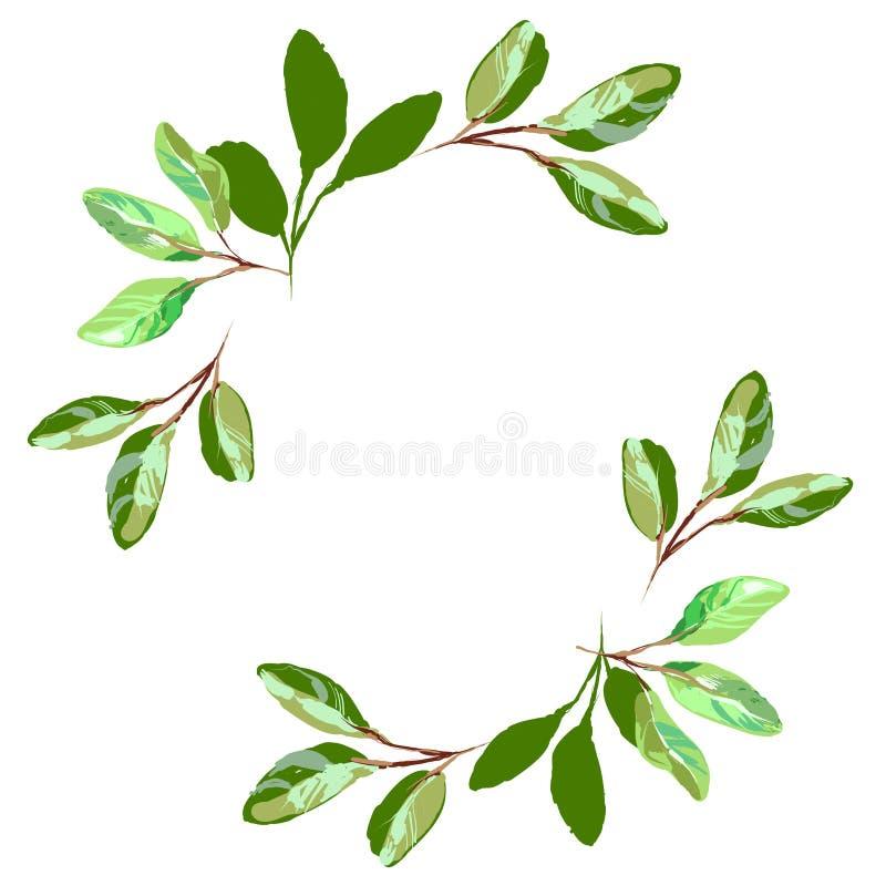 Quadro minimalistic erval do vetor Entregue plantas tiradas, ramos, folhas no fundo branco Convite do casamento das hortaliças ilustração stock