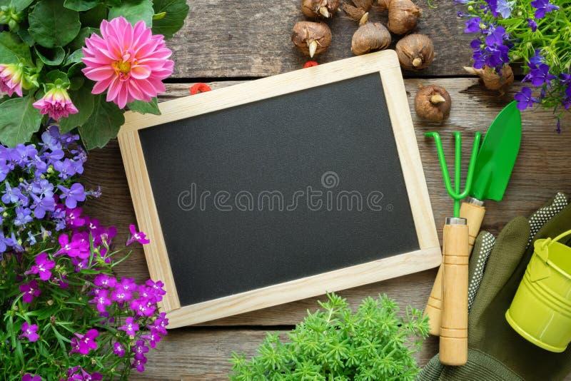 Quadro-negro vazio, plântulas de flores do jardim, cubeta, pá, ancinho, luvas Copie o espa?o para o texto imagens de stock royalty free