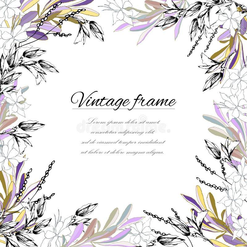 Quadro para o texto no estilo do vintage Flores e folhas pintadas em um fundo branco, para a decoração, papel, cartões, cumprimen ilustração stock