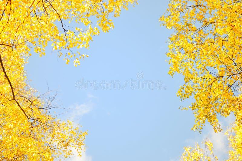 Quadro pelas folhas de plátano no parque da cidade fotos de stock