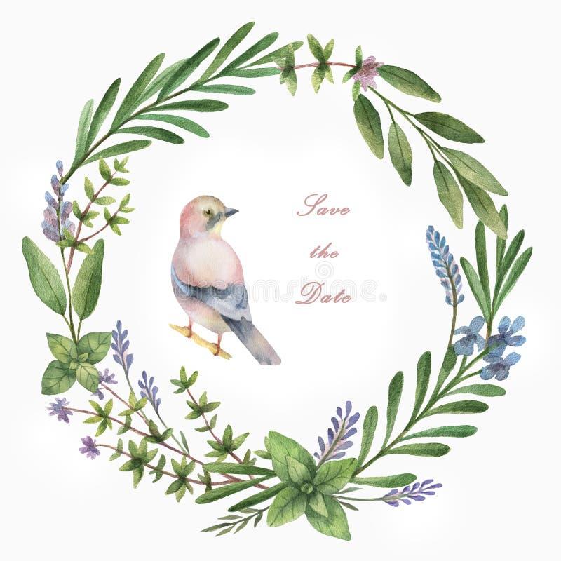 Quadro pintado à mão do círculo da aquarela com ervas, especiarias e pássaro ilustração do vetor