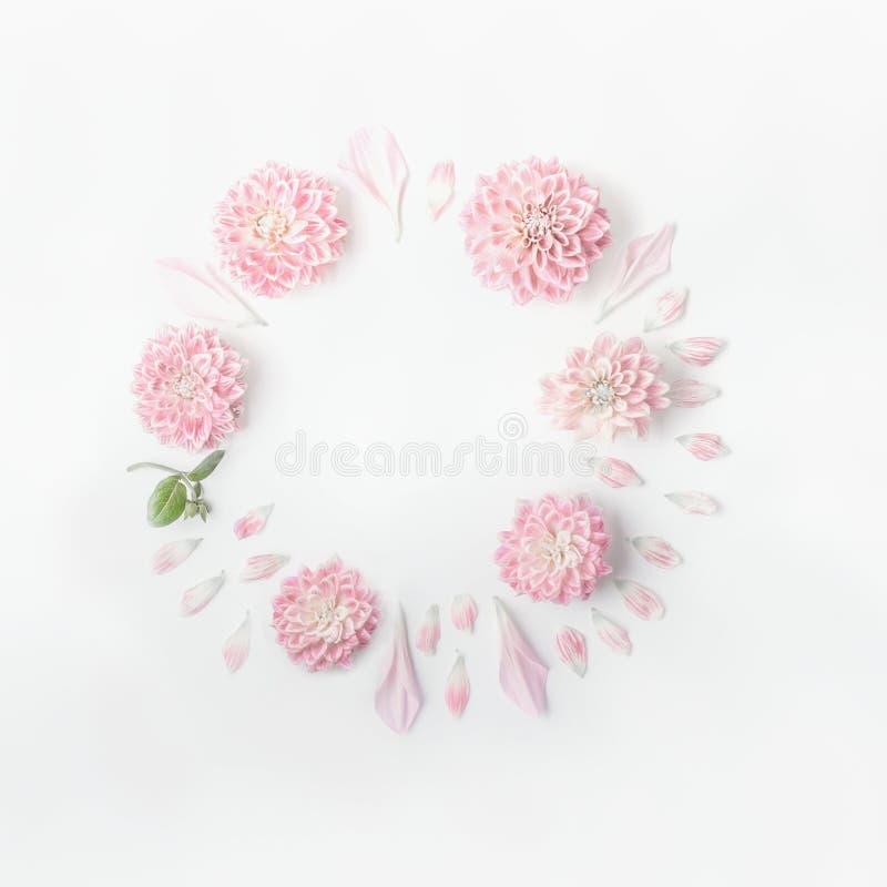Quadro redondo de flores e de pétalas do rosa pastel no fundo branco da mesa Grinalda floral Disposição pelos feriados que cumpri imagens de stock