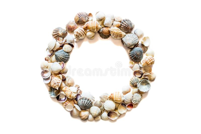 Quadro redondo do c?rculo das conchas do mar diferentes isoladas no fundo branco com espa?o para o texto Textura da concha do mar imagens de stock