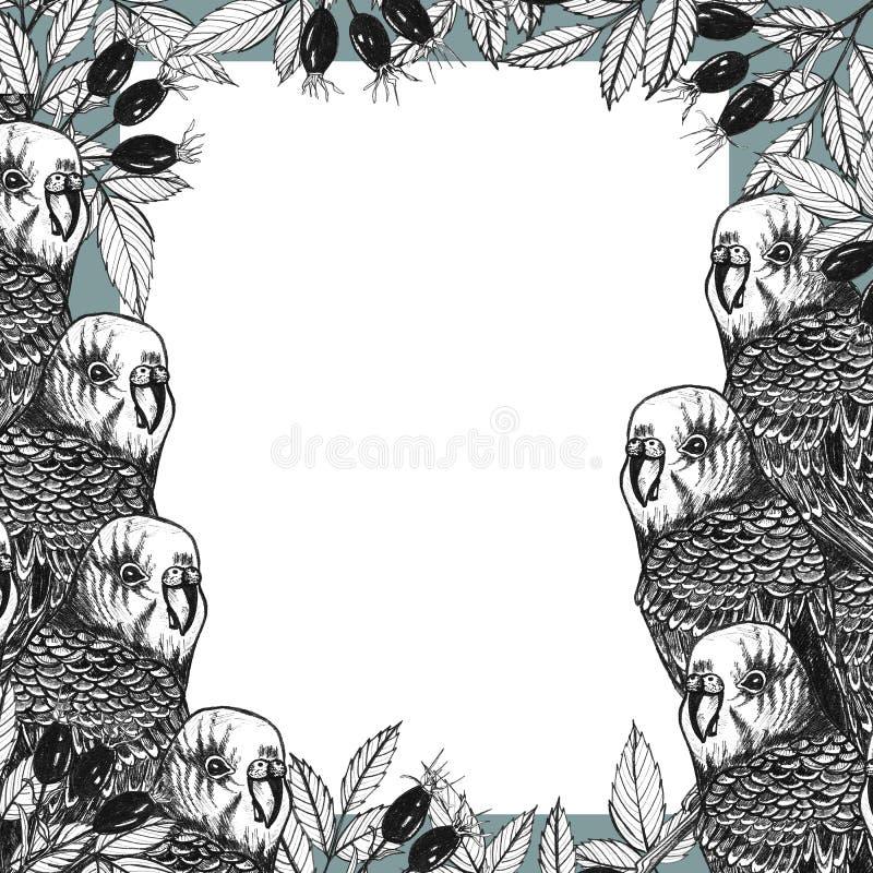 Quadro tirado mão com papagaios e ramos do dogrose ilustração do vetor