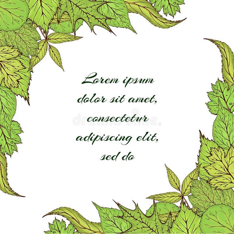 Quadro tirado mão do vetor com as folhas e ramos verdes da floresta Folhas da mola ou do verão para o convite, casamento ou ilustração do vetor