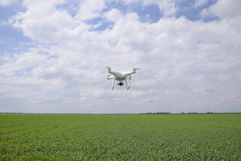 Quadrocopters brancos de voo sobre um campo de trigo fotografia de stock royalty free