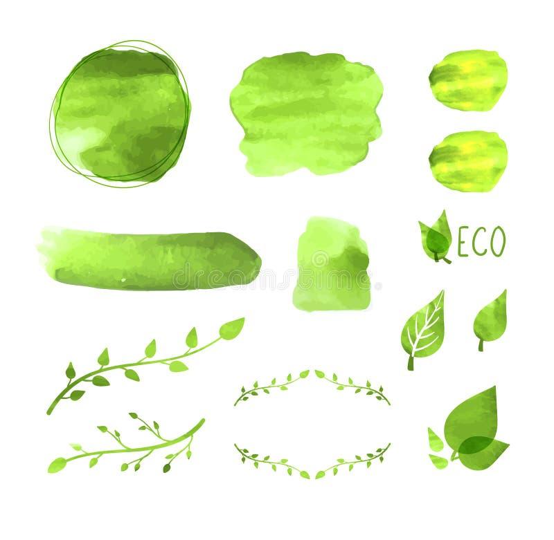 Quadros ajustados, desenhos da placa da aquarela do vetor das plantas, elementos do design floral, textura verde da pintura, conc ilustração do vetor