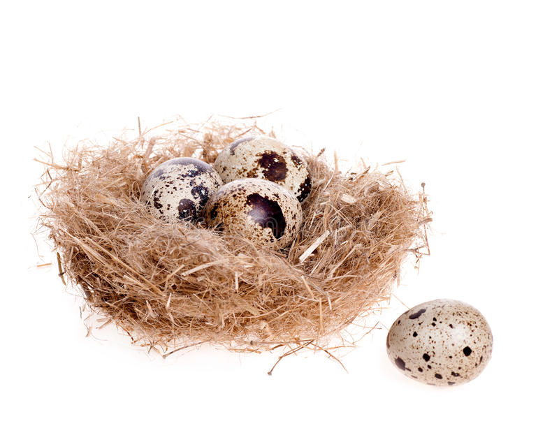 Download Quail Egg On The Background Of The Nest With Three Eggs Stock Image - Image of gourmet, eggshell: 29008479